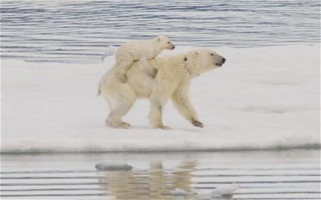 Polar_1773859c