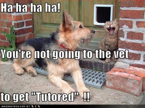funny-dog-pictures-cat-knows-why-dog-is-really-going-to-the-vet
