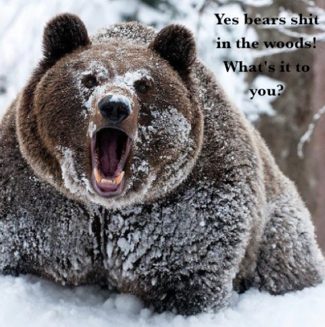 enraged bear