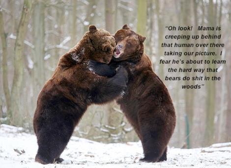 bearplay