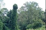phalicflora